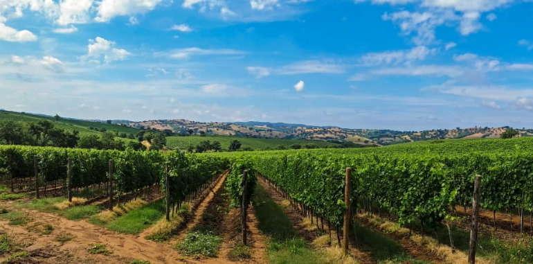 Balade à moto en Côte d'or au cœur des vignobles de Bourgogne